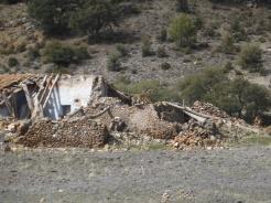 Cabras montesas en cortijo abandonado
