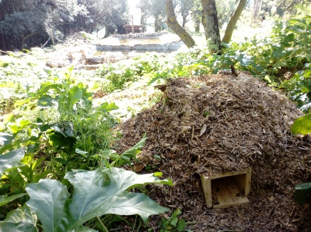 Refugio Erizos