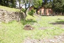 El refugio de erizos